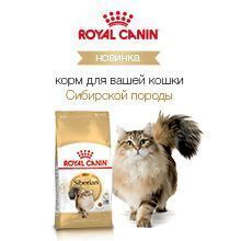 Royal Canin Siberian Cat